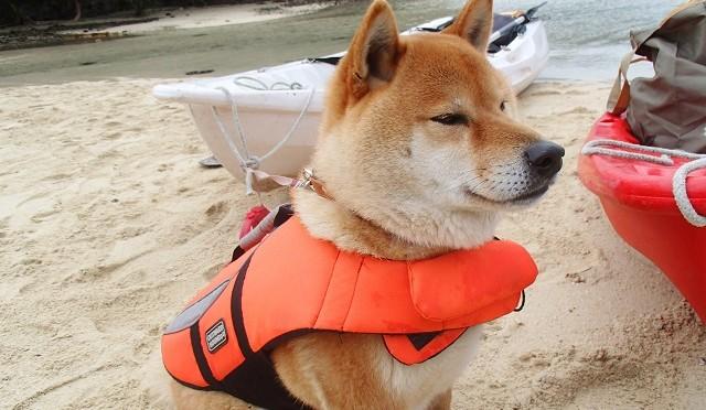 石垣島の大冒険 愛犬とカヌーで行く無人島探検