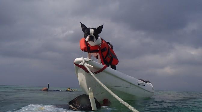 愛犬と行く無人島探険