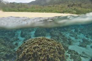 ビーチとサンゴのコラボ
