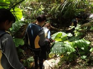 ジャングルを抜けると・・・・