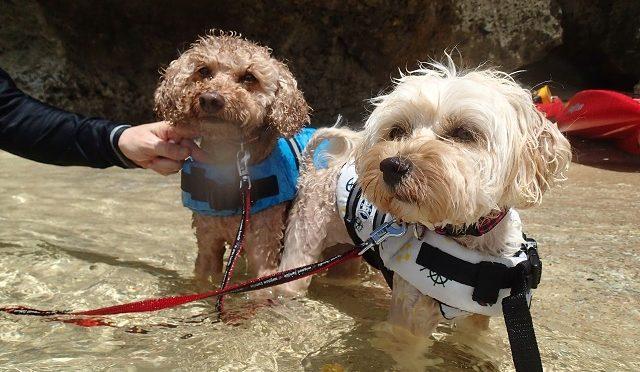 愛犬と海あそび