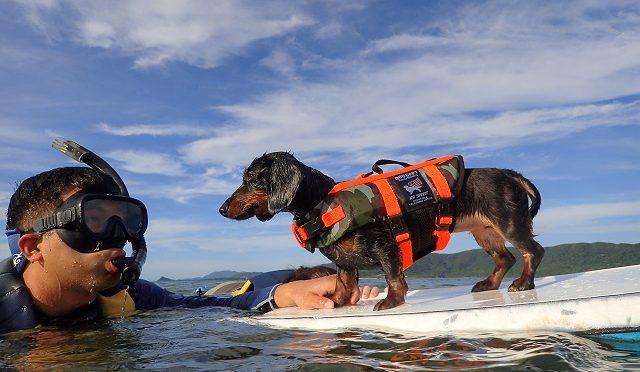 石垣島の秘境 愛犬とシュノーケル探検